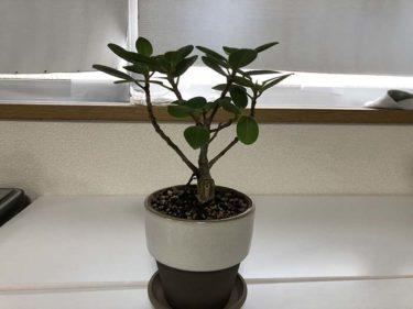 植物の水やりを記録・管理・通知するアプリ3選。植物日記機能のあるアプリも。