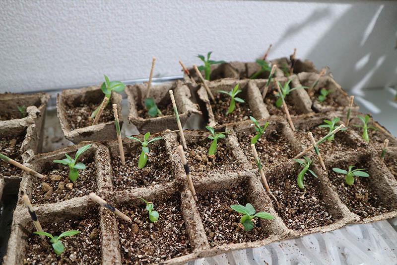植物を植えた状態