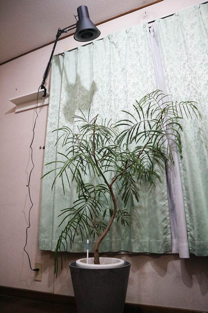 活用例1:植物育成用ライトを取り付ける